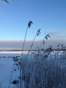 FrozenFjord