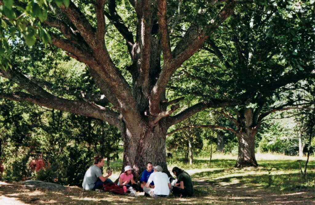 Conversations under a tree